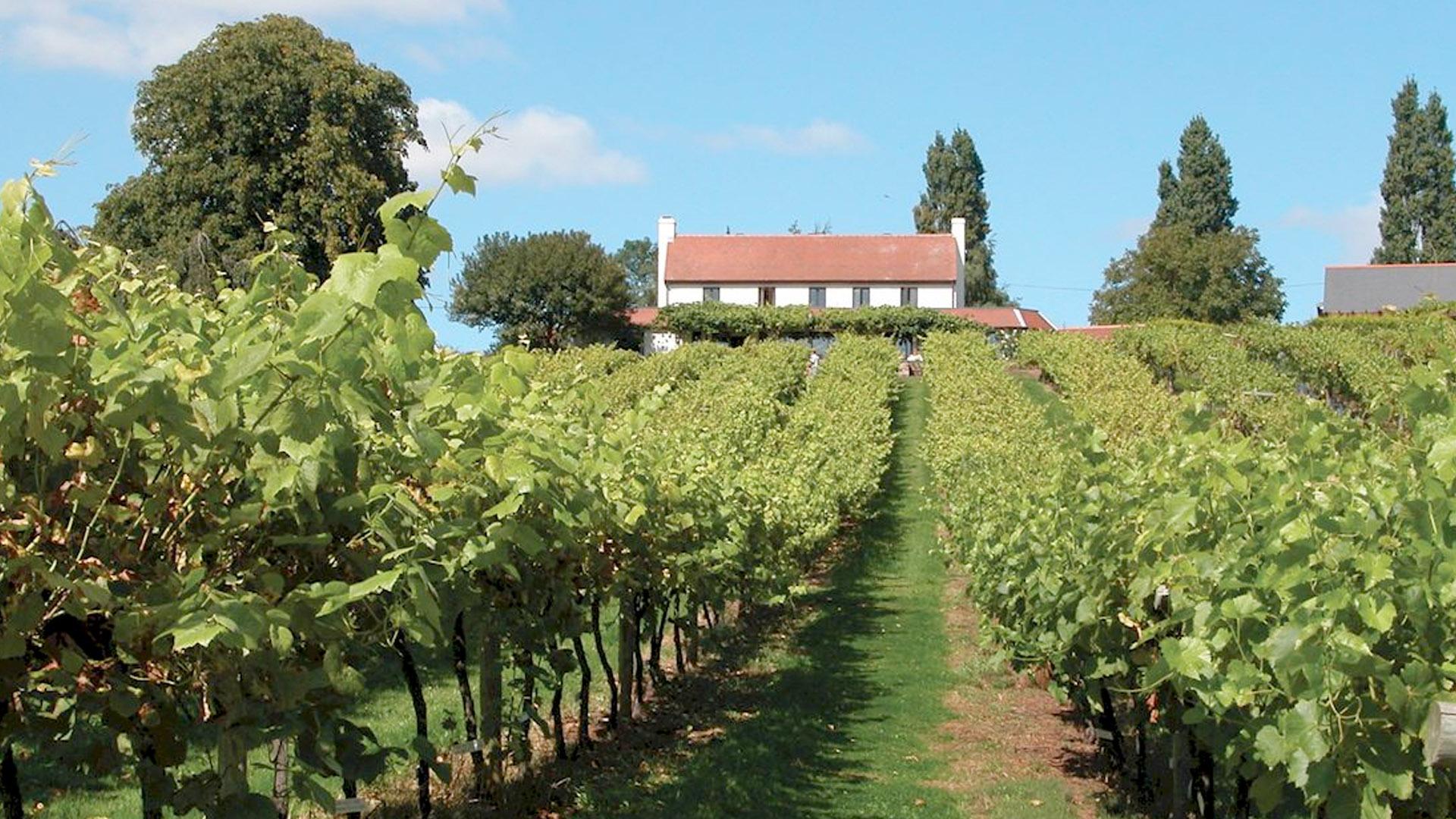 wine tasting vineyards the mercure southampton centre. Black Bedroom Furniture Sets. Home Design Ideas
